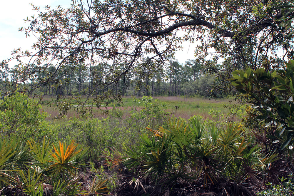 Lyonia preserve